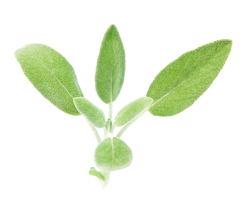Sage Essential Oil (Salvia Offilnalis)