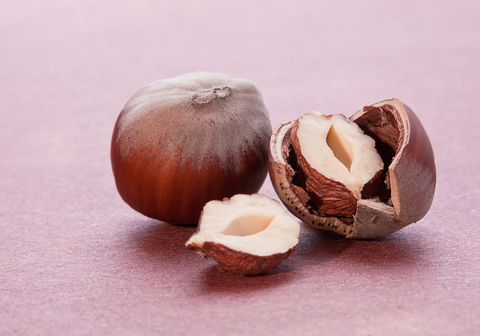 Hazelnut Oil (Corylus Avellana)