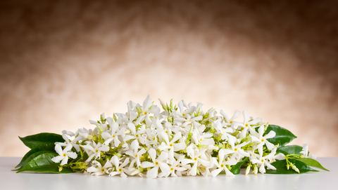 List of ingredients used in our natural skin care products.