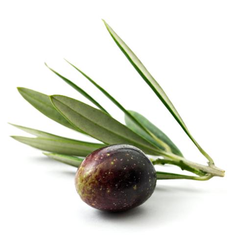 Olive Oil (Olea Europa)