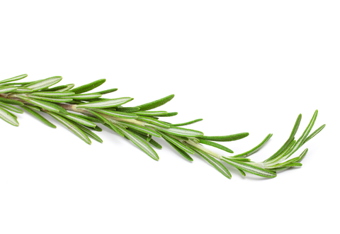 Rosemary Essential Oil (Rosmarinus Officinalls)